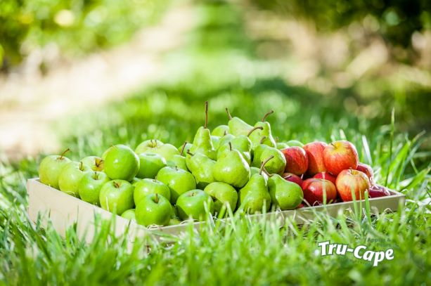 Quercetin, a compound found in apples, may be helpful in combating Covid-19.