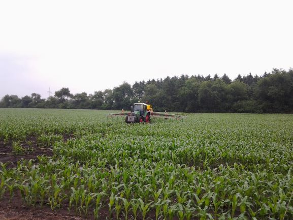 Nurse crops – The contribution to sustainable and environmentally friendly agriculture