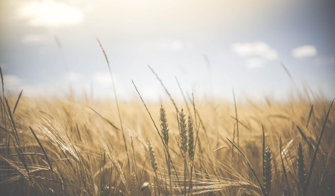 University of Exeter help diversify farming of the future