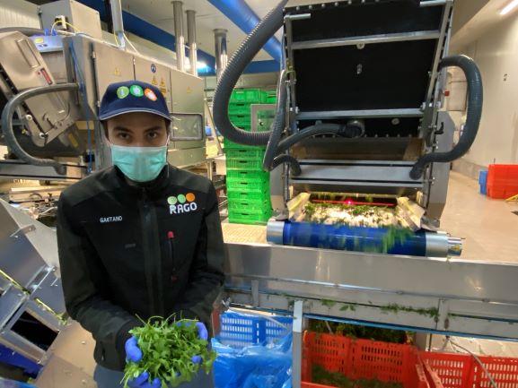 Tomra food helps Rago to sort the best salad