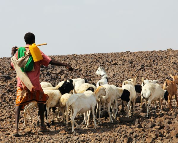 Transforming Africa's livestock sector is key to food security amid surging demand for meat and milk, report finds