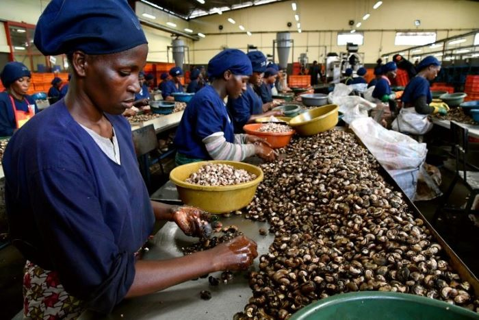 Côte d'Ivoire showcases investment opportunities in cashew and cotton sectors to international investors at AGRF 2020