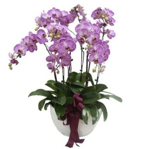 Purple Grand Phalaenopsis Arrangement by FARM Florist Singapore