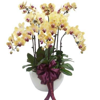 Yellow Orchid Phalaenopsis Arrangement by FARM Florist Singapore