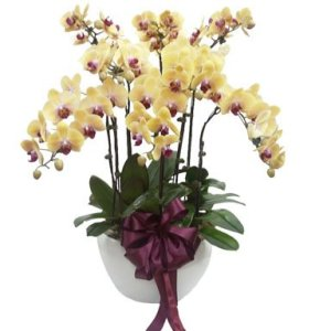 Yellow Orchid Phalaenopsis Arrangement by FARM Florist Singapore