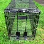 Humane-Trap-Live-Animal-Coyote-Stray-Cat-Fox-Raccoon-Trap-50x24x19-0-0