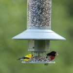 Wingscapes-AutoFeeder-Automatic-Bird-Feeder-0-1