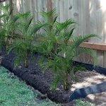 Mr-Garden-30mil-18-W-x-50-L-Root-Barrier-Water-Barrier-Garden-Edge-Sheet-0-0