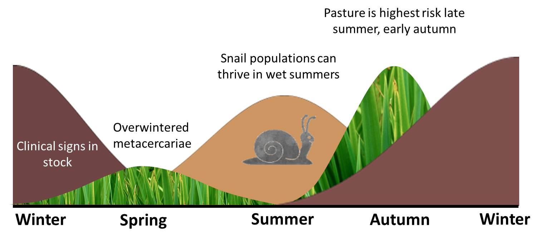 hight resolution of liver fluke summer infection of snails