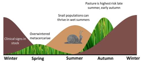 small resolution of liver fluke summer infection of snails
