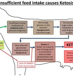 ketosis diagram [ 1099 x 800 Pixel ]