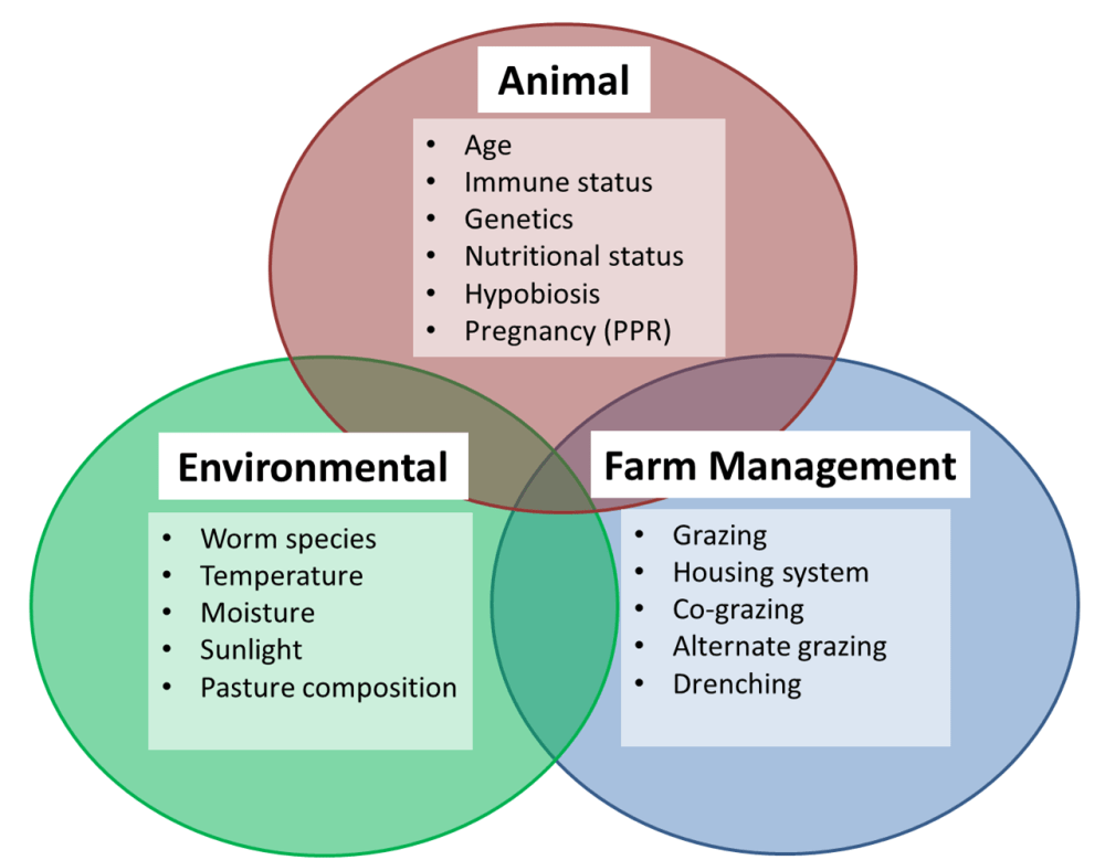 medium resolution of factors which affect parasite infection in livestock
