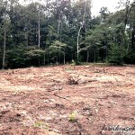 Day 81 – 84 Clearing Land