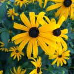 Farmhouse Flower Garden Tour