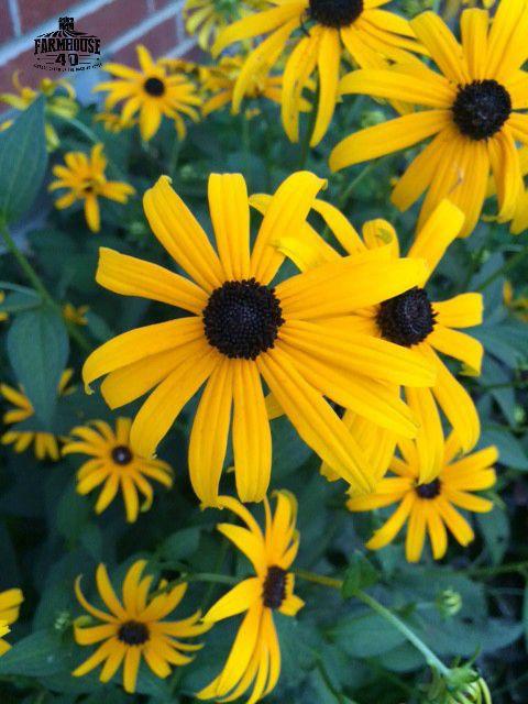 flower-garden-tour-@farmhouse40