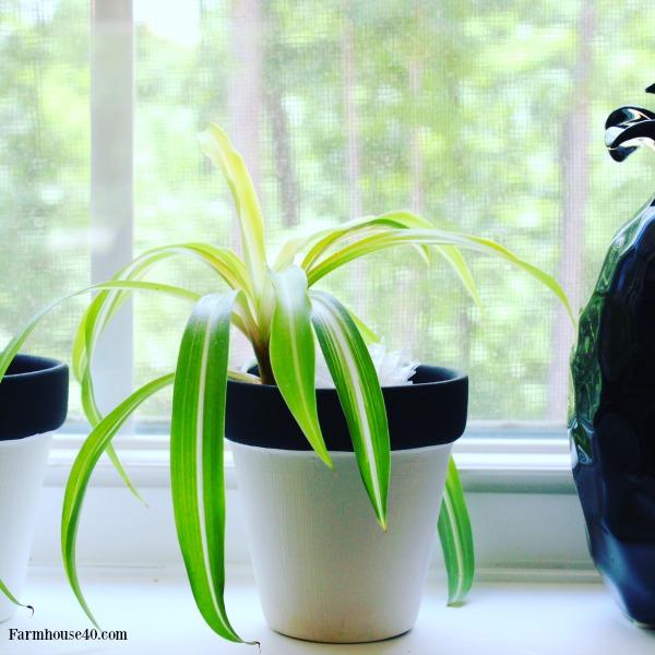 indoor-plants