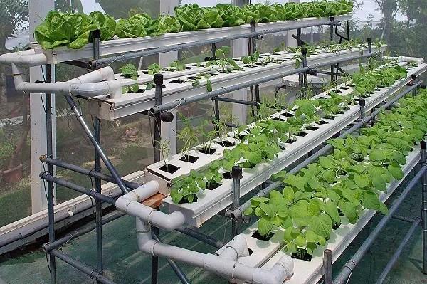 hydroponics system farming