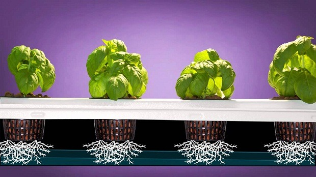 Dealzer Hydroponic system