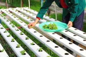 hydroponic gardening starter kit