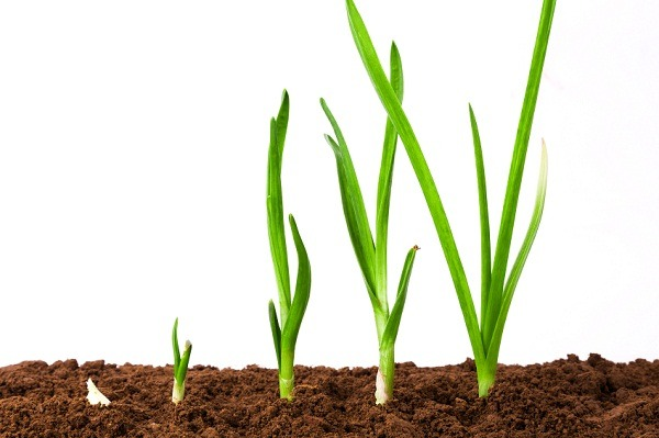 Monitoring growth of plants