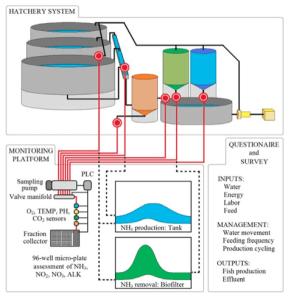 Advanced aquaculture system tank setup