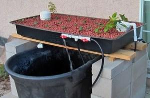 Simple Aquaculture system setup