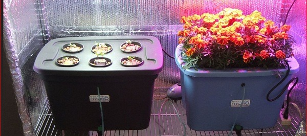 Tricks Of Growing In Bubbleponic Complete Planter Kit Guide