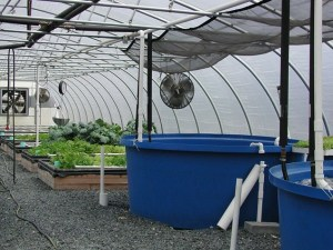 how to design an aquaponic greenhouse