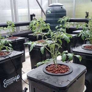 Undercurrent hydroponics structure