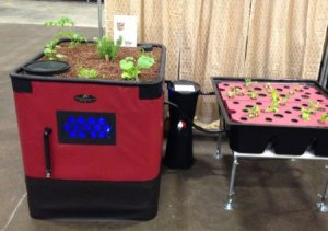 aquaponic System grow beds
