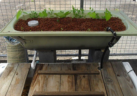Homemade Aquaponics Setup In Europe