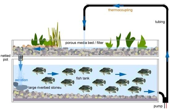 How to Start Your Aquaponics Grow System setup