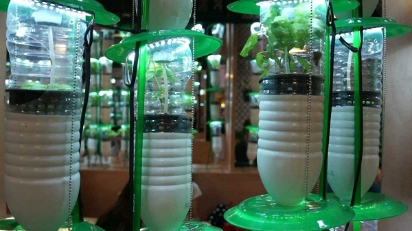 Hydroponic Using Plastic bottle with lights