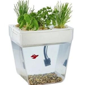 Hydroponic Fish Tank