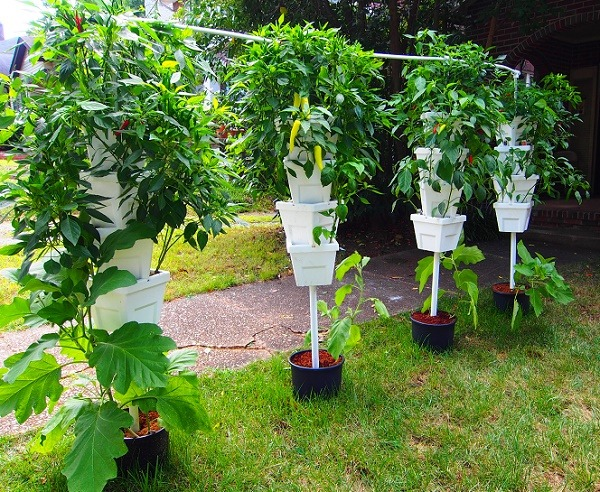 Best guide to growing in hydroponics systems you need to know for How to grow hydro in a fish tank