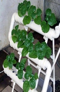hydroponic garden piping