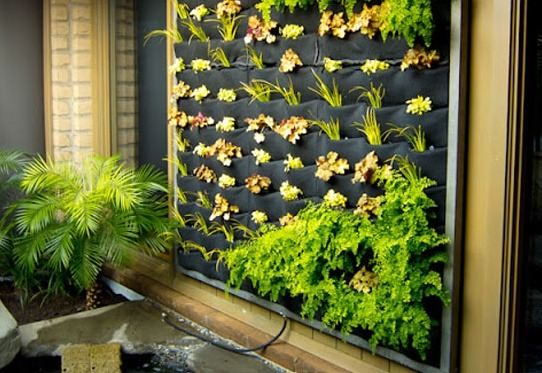 Hydroponic Green Wall Systems