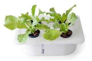 Small hydroponics system
