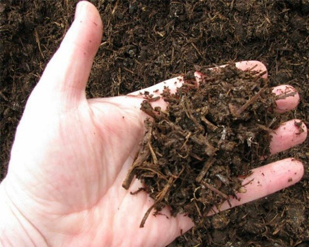 Best mushroom compost