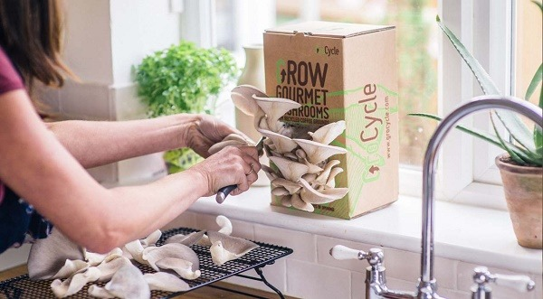 Grocycle Mushroom Growing System Kit