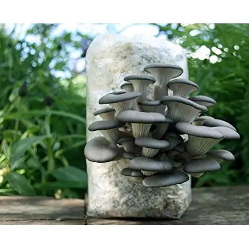 Root Mushroom Farm 3 Pound Log