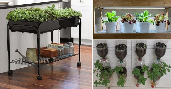 How Do You Start An Indoor Hydroponic Garden?