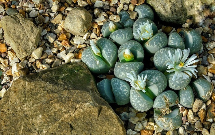 What You Need To Know About Lithops
