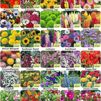 Aero Seeds 40 Varieties of Flower 2050+ Seeds Combo For Your Garden Beautiful Bloom Germination Seeds.