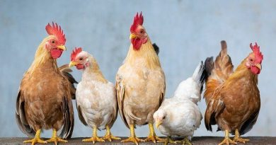 How to start a poultry farm?
