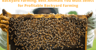 Backyard Farming: Best Animals You Must Select for Profitable Backyard Farming