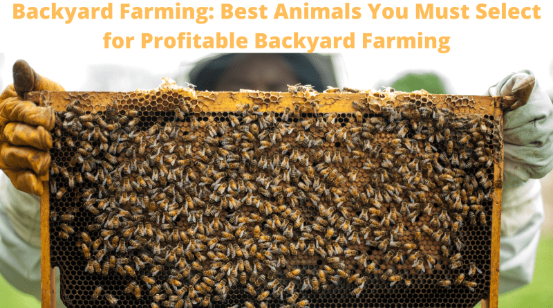 Backyard Farming: Best Animals You Must Select for Profitable Backyard Farming