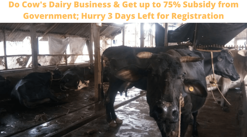 Do Cow's Dairy Business & Get up to 75% Subsidy from Government; Hurry 3 Days Left for Registration