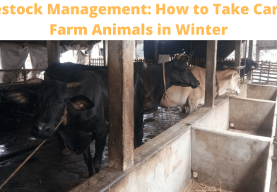 Livestock Management: How to Take Care of Farm Animals in Winter