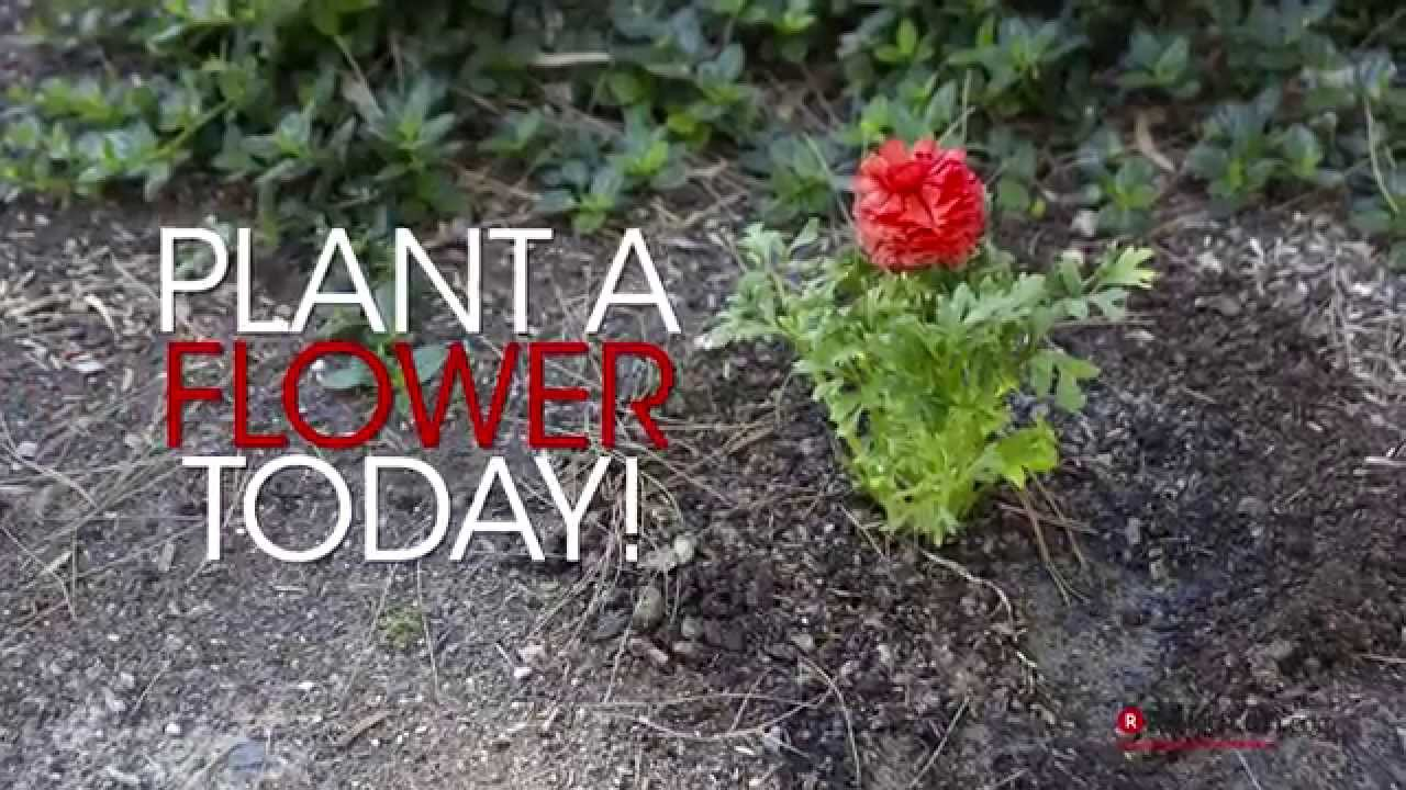 Image result for plant a flower day